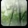 施設/竹林